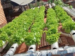 Sistema hidropónico para 300 plantas