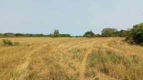 19 hectáreas en Cnel. Bogado Itapúa