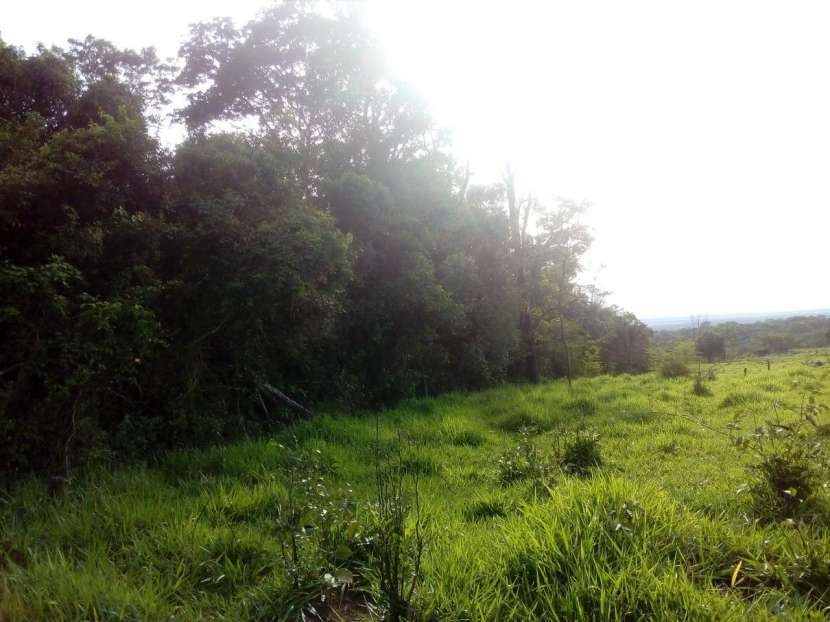 3 hectáreas en Mbuyapey - 0