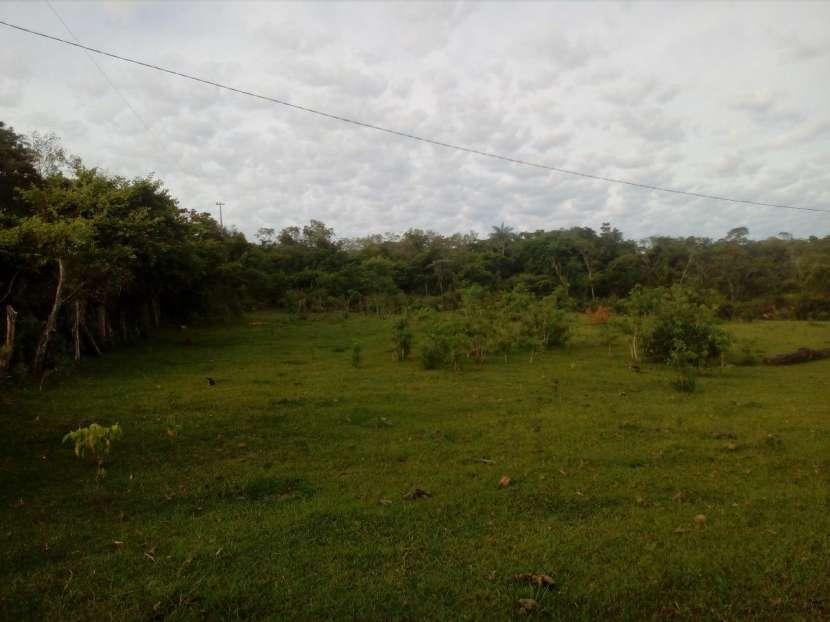 3 hectáreas en Mbuyapey - 2