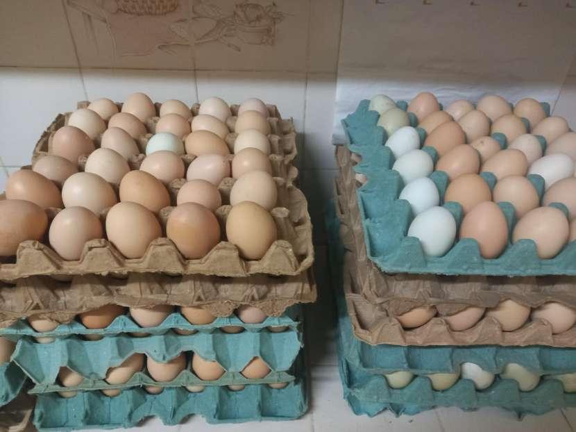 Huevos caseros - 1