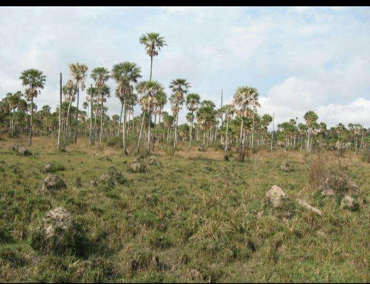 Terreno de 2.400 hectáreas en Villeta - 1