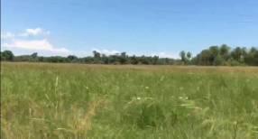 100 hectáreas en Tobatí