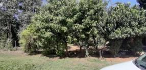 Terreno en Ñemby barrio Uruguay