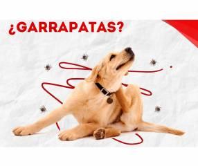 Control de garrapatas y pulgas en mascotas