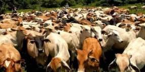Asistencia veterinaria para ganado
