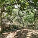 Terreno de 10 hectáreas en Caacupé COD 0154 - 3