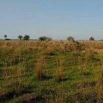 Terreno de 8 hectáreas en San José de los Arroyos COD 0148 - 1
