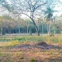Terreno de 4 hectáreas en Nueva Colombia COD 0158 - 1