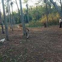 Terreno de 4 hectáreas en Nueva Colombia COD 0158 - 2