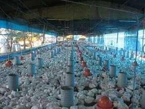 Granja avícola en Loma Grande Nueva Colombia COD 0163 - 7