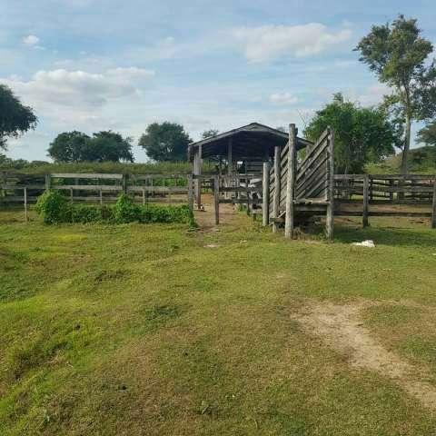 Propiedad ganadera y agrícola de 470 hectáreas - 3