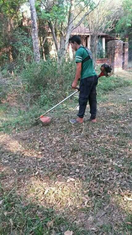 Poda de árboles y jardinería en general