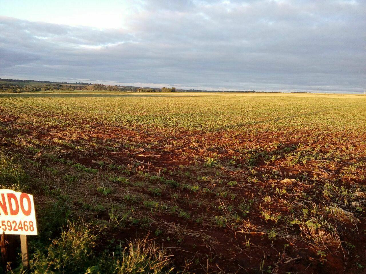 5 hectáreas en Santa Rita
