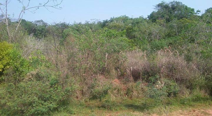 Terreno de 1 hectarea
